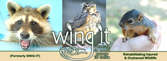 wing-it-logo