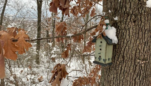 A bird house with snow on the roof